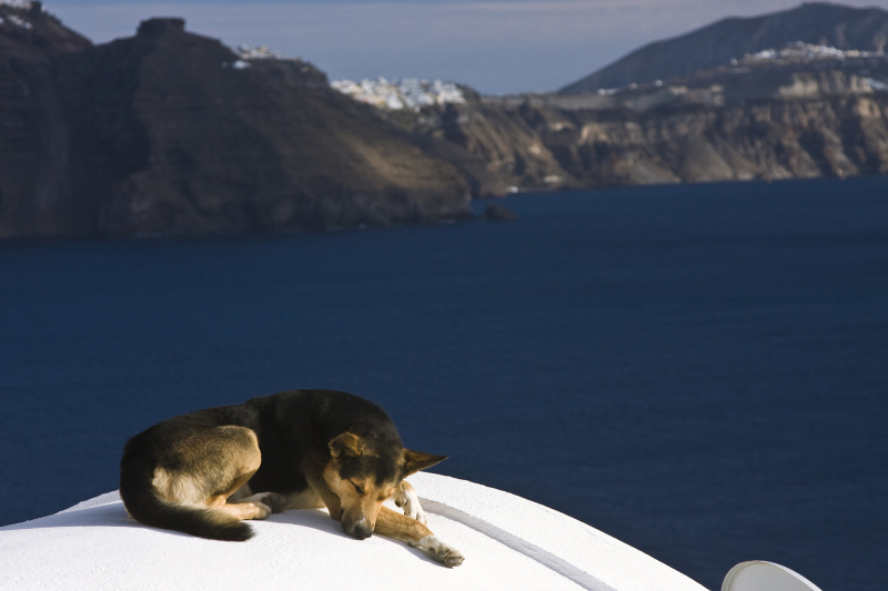 Greek Dog Siesta