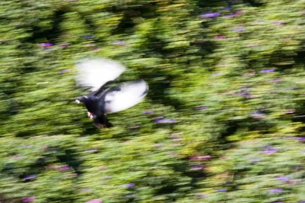 Flight of the Pigeon