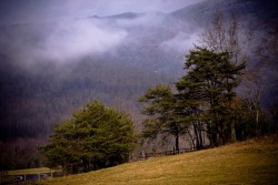 Black Mountain road trees