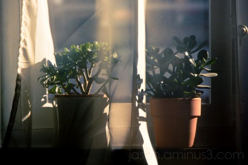 dreamy plant veil