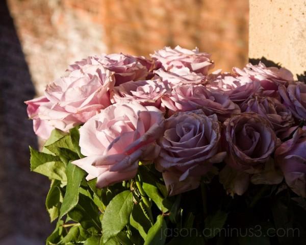 romance rose brick
