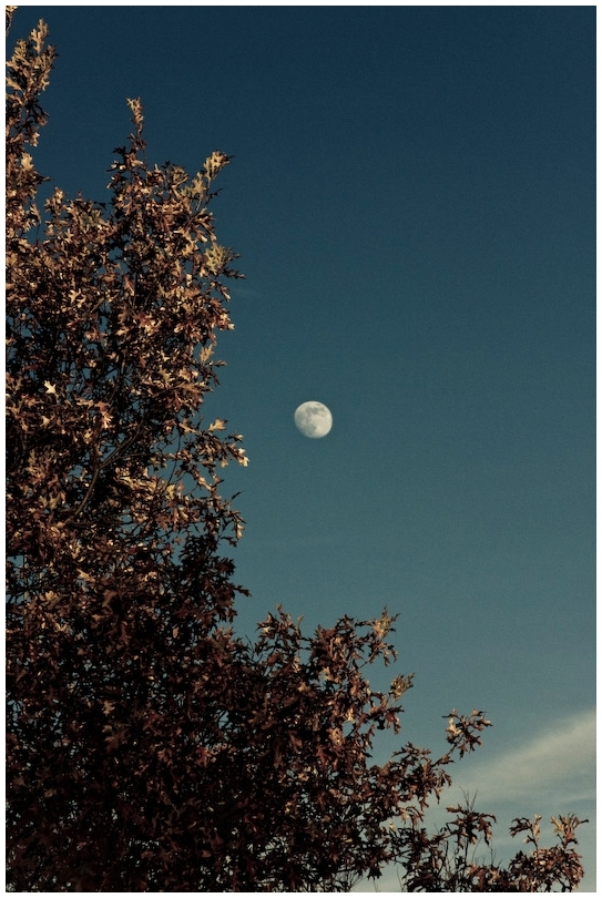 muted moon and tree