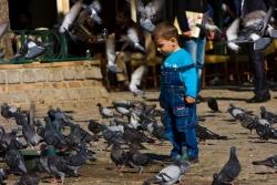 pigeon boy