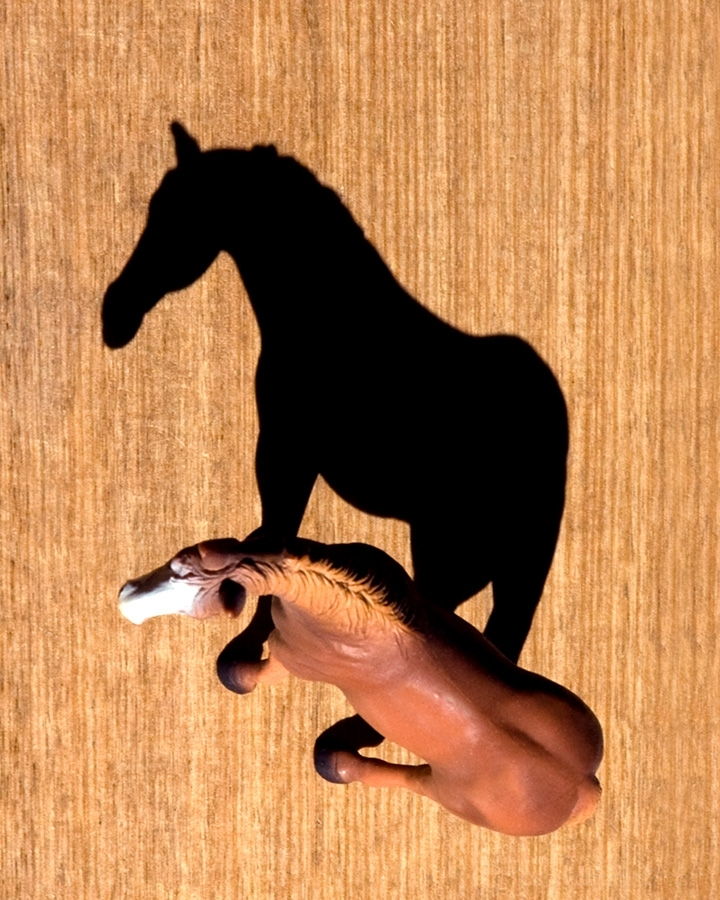 horse toy shadow