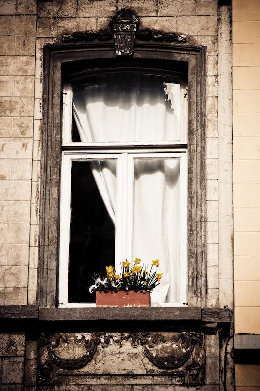 yellow flowerbox Brussels