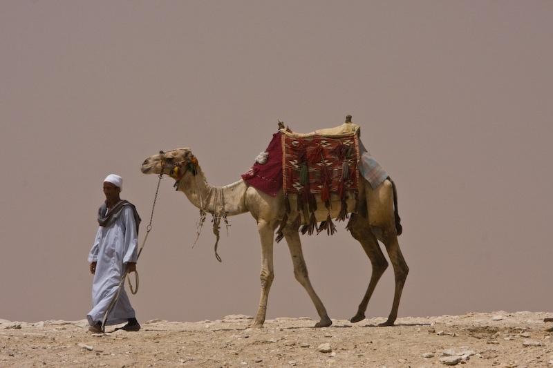 Sakkarah camel man
