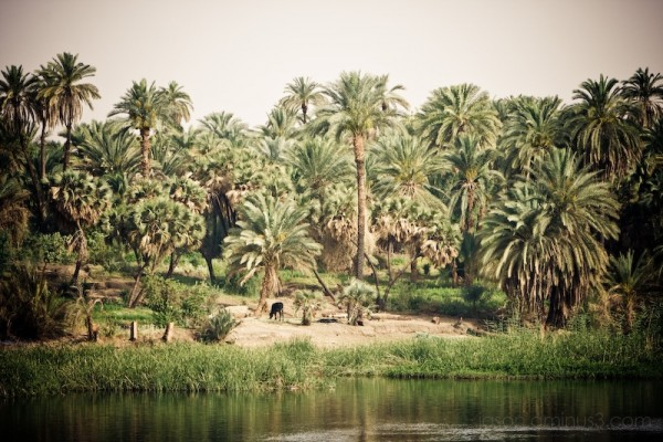 Along the Nile (pt 2)