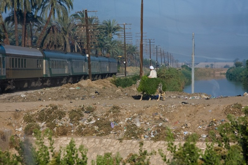 Egypt donkey and train