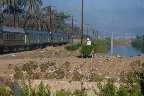 Donkey vs. Train