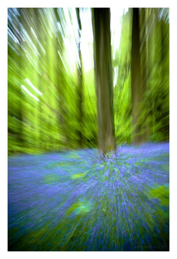 Hallerbos Zoom Blur