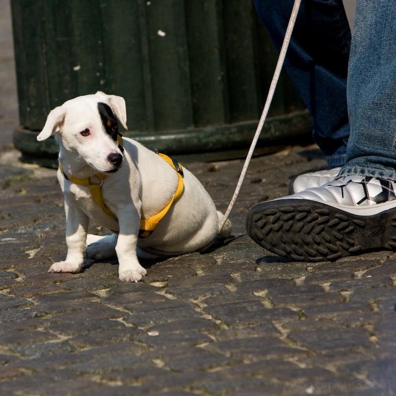 Puppy Bruges