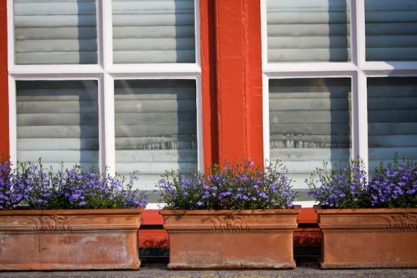 Brugge flowerbox