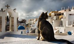 Oia Santorini cat