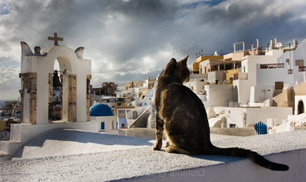 CATURDAY in OIA