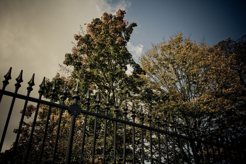 fall tree fence