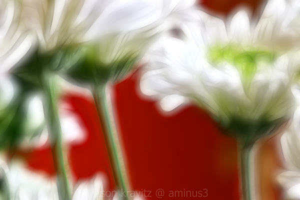 Painted White Daisy on Red Wall