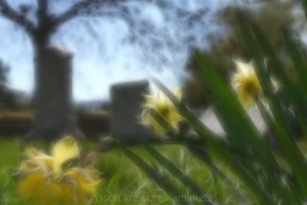 yellow flower cemetery