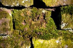 shadow lichen moss