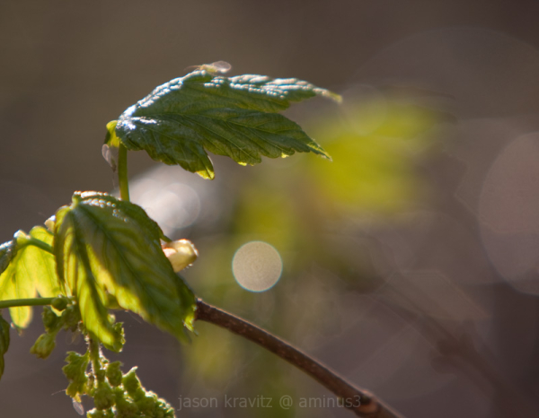 Droplet Orb
