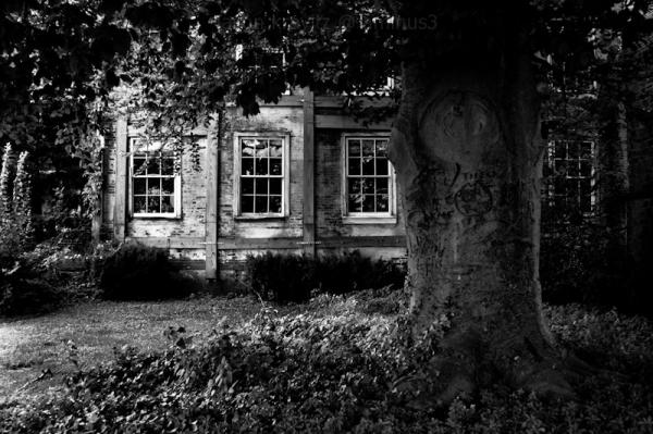 tree windows