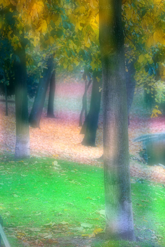 dreamy autumn