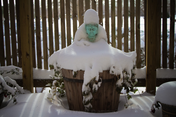 Snowy Sage