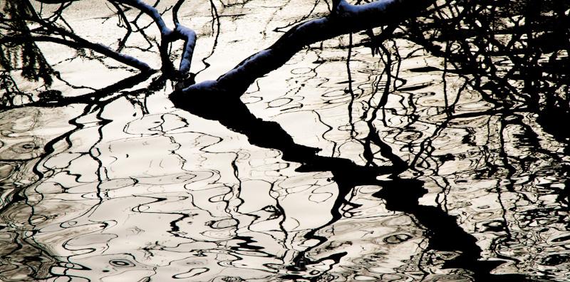 twisty lines pond