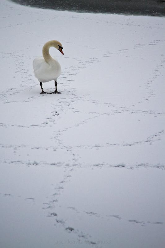 Swan Redux