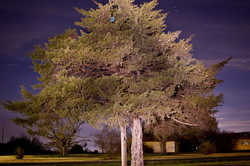 light painting tree