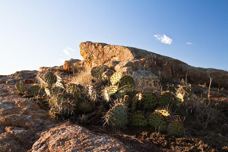 cactus cloud