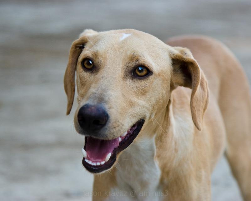 dog in Crete