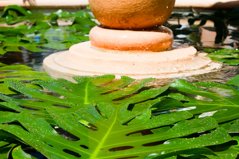 fountain leaves