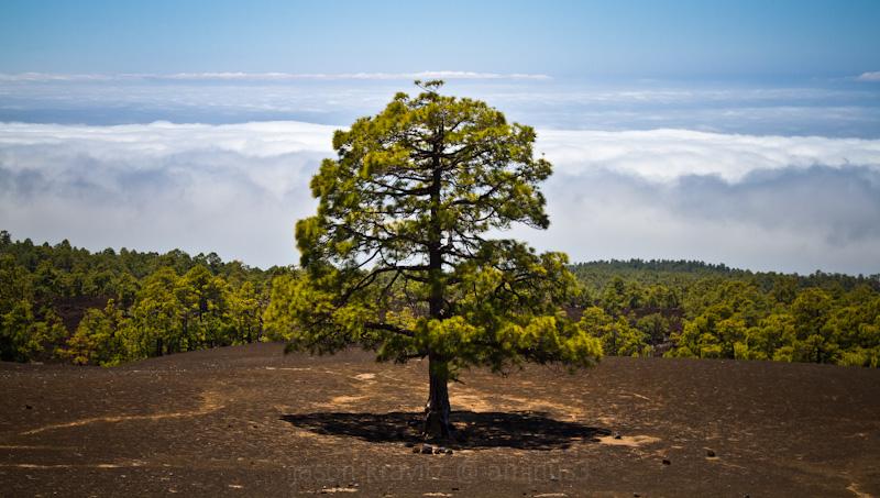 volcano lone tree