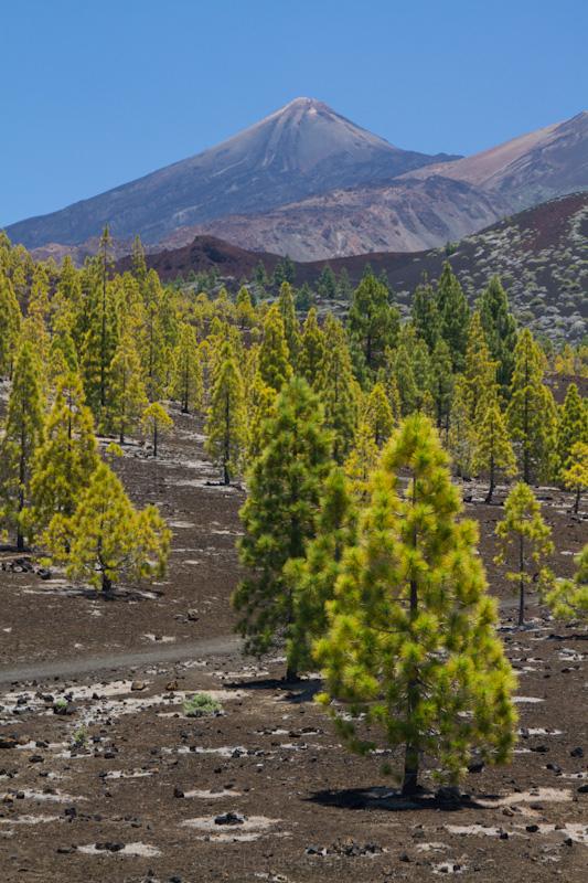 Fluffy Volcano Trees