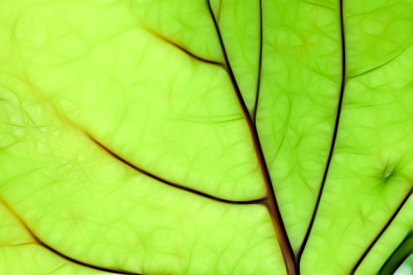 neon green leaf