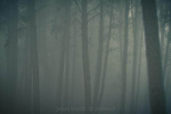 tree fog blur