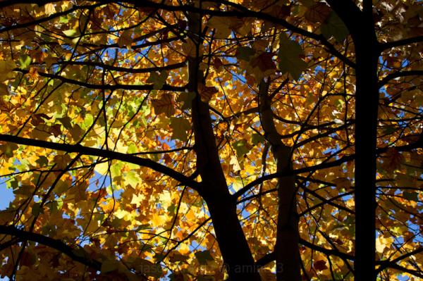 Autumn atic