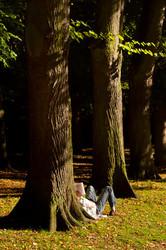 autumn tree of knowledge