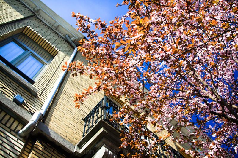 brussels tree spring