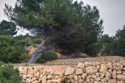 Dandelion wall