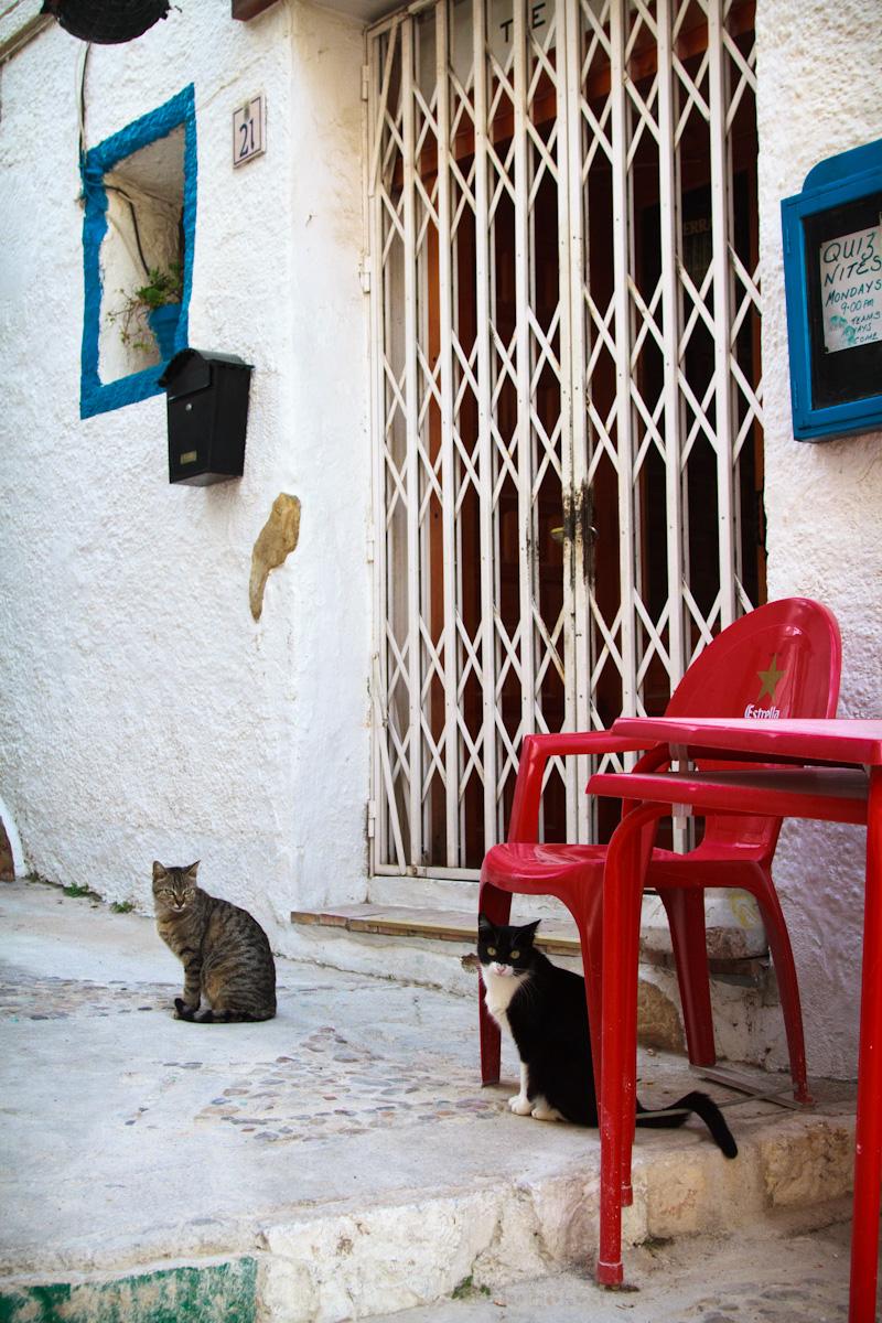 street cat calpe