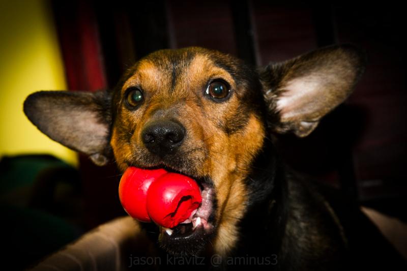cute terrier dog
