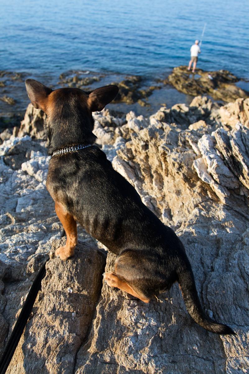 dog watching fisherman