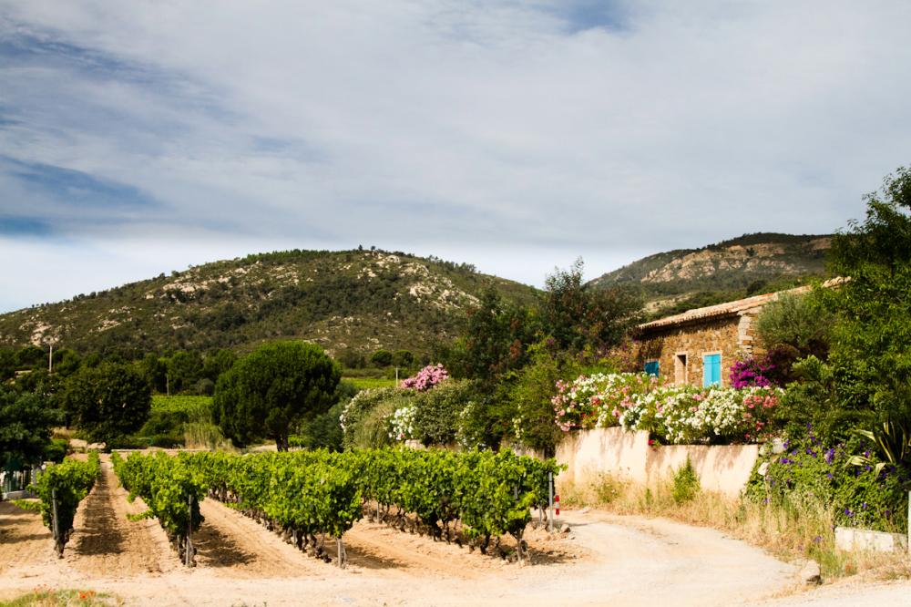 le-plan-de-la-tour vineyared