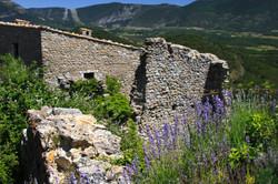 bargeme france lavendar
