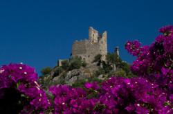 Grimaud castle with Bougainvillea