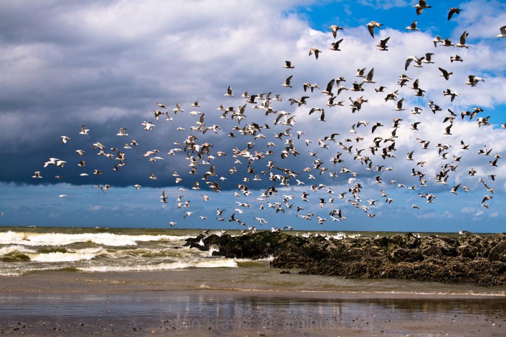 seagull scene