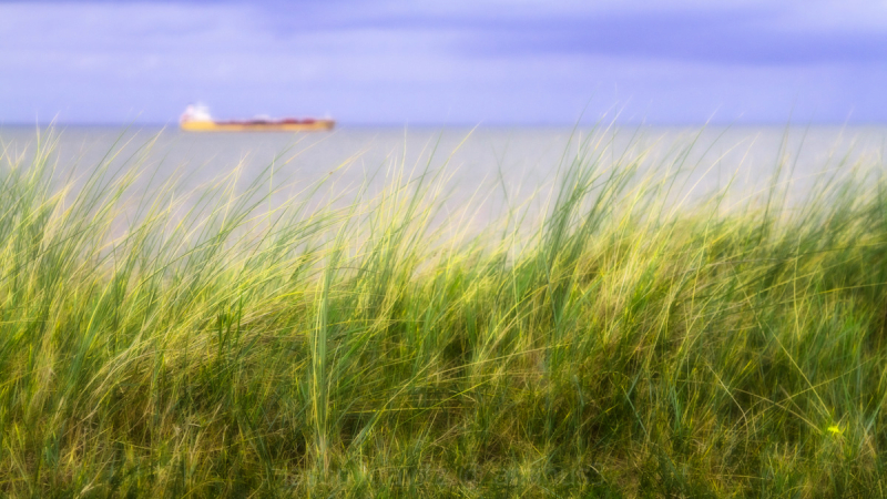 sea grass and ship
