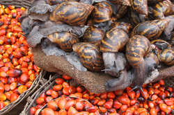 Snails and Seeds