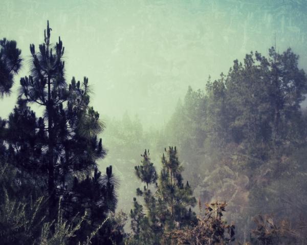 Fuzzy Foggy